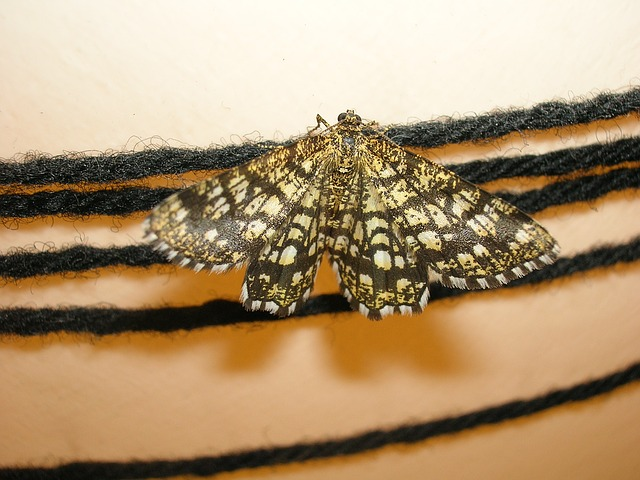 moth repellent on rugs